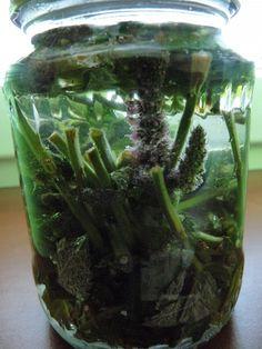 Mátu i s květy vložíme do vhodné nádoby, zalejeme převařenou, ale ne vroucí vodou (zničily by se látky v mátě), spíš teplou, vlažnou, ale zas ne...
