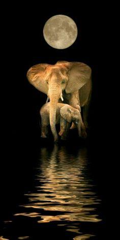 Elephants in the moon light