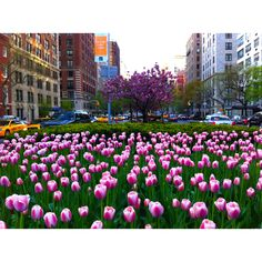 Spring in NYC - Park Avenue