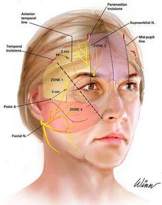 reflexology - Google Search Facial Anatomy, Botox Fillers, Medical Spa, Anatomy And Physiology, Reflexology, Study Guides, Makeup, Face, Medicine