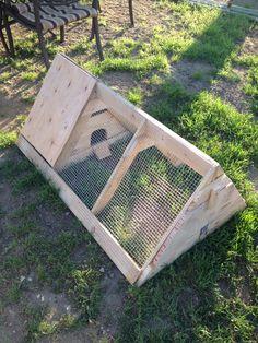 Our quail house