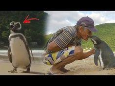 No Creerás la Historia de este Pingüino y El Hombre que salvo su vida
