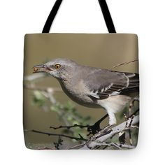 Mocking Bird Tote Bag featuring the photograph Mocking Bird With Ripe Hackberry by Tom Janca