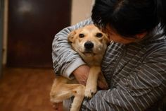 Christmas Rescuers Save 1,300 Dogs And Cats From Winter Without Electricity | Care2 Causes