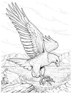 Coloring pages birds of prey