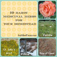 10 Hardy Medicinal Herbs for your Homestead -- JoybileeFarm.com