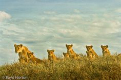 Serengeti Great Migration..literally DYING to witness this