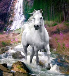 White horse running in the mountain creek bed.