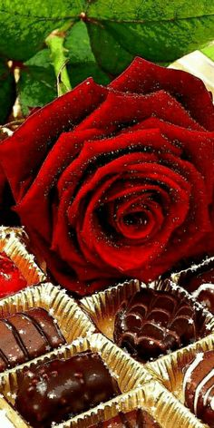 Good Morning Flowers Gif, Valentine Flower Arrangements, Magical Images, Beautiful Red Roses, 3d Rose, Gif Animé, Candy Gifts, Red Flowers, Tumblr
