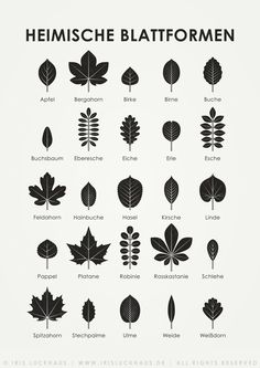 "Sheet ""Domestic leaf shapes"" for determining and recognizing the leaves of domestic .""Domestic leaf shapes"" sheet for determining and recognizing the leaves of native trees; Poster, art print and postcard, illustration © Iris Luckhaus{DIY folder} Form Poster, Print Poster, Logo Fleur, Iris, Illustration Design Graphique, Shape Posters, Animal Tracks, Information Graphics, Plant Design"