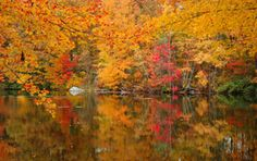 Wellesley, Massachusetts in the fall...  stunning