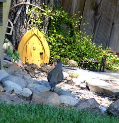 the Gnome's home in the tree, visited by Quail and their babies~~~