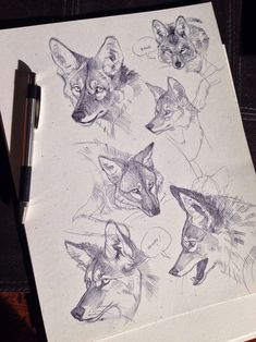 using the holidays to power through some studies!  Yesterday was coyote day, apparently.