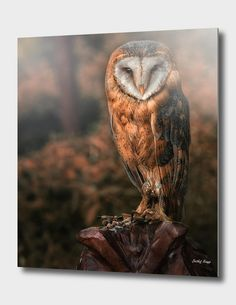 Discover «barn owl», Exclusive Edition Aluminum Print by Detlef Knapp - From 55€ - Curioos