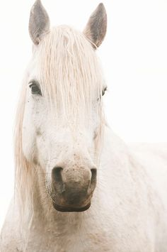 A White Horse. So pure. So calm. So beautiful. Just like Lacee.