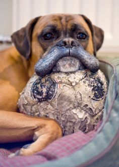 Senior-Dogs-PHUNRISE-11