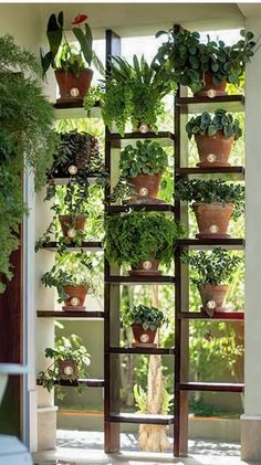 Divider - creative use of dividing a space but also allowing light and giving a space for plants.