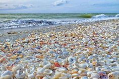 Sanibel Island, Florida !