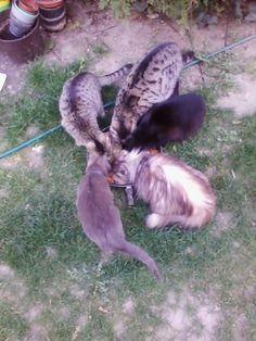 lot of cat