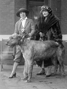 1921 European Dog Show