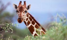 Monde sauvage - Liège: Une entrée pour 1 personne au zoo-safari Le Monde Sauvage d'Aywaille à 11 €