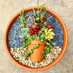 The picture may contain: plant You can find many different pictures about painted cactus arrangement Succulent Arrangements, Cacti And Succulents, Planting Succulents, Cactus Plants, Planting Flowers, Succulent Gardening, Garden Terrarium, Succulent Terrarium, Container Gardening