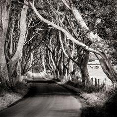 "the dark hedges - northern ireland - ""What you seek is seeking you.""   ― Rumi"
