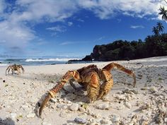 Increibles fotografias de playas