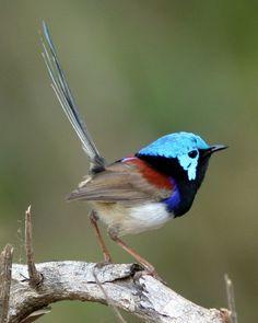 Fotografia colorido pajarito tonos azules