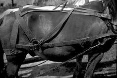 Származási helye » Helység: Gyergyószárhegy (Lăzarea) » Megye: Hargita (Harghita)  Készítés ideje: 1963--06--00 Készítette: Vámszer Géza Lelőhely: Kriza János Néprajzi Társaság fotóarchívuma Horses, Bags, Fashion, Handbags, Moda, Fashion Styles, Fashion Illustrations, Horse, Bag