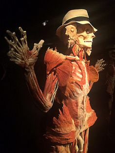 Real Bodies: cadaveri e organi in mostra a Milano