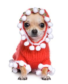 And Bells on Head | 18 Pups In Crochet Sweaters