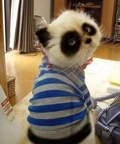 it looks like a panda, a raccoon, and a cat all wrapped up in one sweater :)