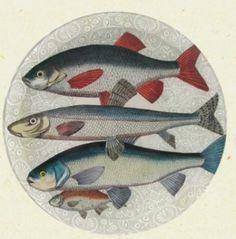 JOHN DERIAN / Fish Market plate