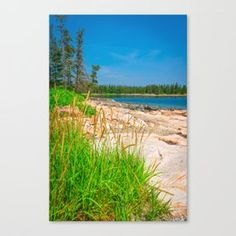 Acadia National Park Beach View Grass Canvas Print Acadia National Park, National Parks, Beautiful Landscape Images, Travel Magazines, Plant Holders, Beautiful World, Grass, Wall Art, Beach