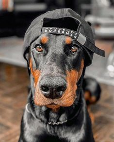 Dachshund Puppies, Cute Puppies, Cute Dogs, Dogs And Puppies, Black Doberman, Doberman Love, Cute Baby Animals, Animals And Pets, Scary Dogs