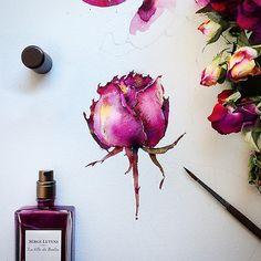 Flowers sketchbook by Katerina Pytina on Behance. Watercolor rose
