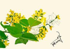 Myanmar famous flower called Padouk-Pan bloom in the time of Myanmar Thingyan Festival on April Royal Pattern, Burma Myanmar, Cartoon Photo, April 13, Flower Art, Watercolor Paintings, Plant Leaves, Bloom, Sketches