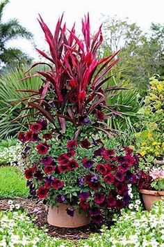 Love red? Then check out this gorgeous container garden that incorporated varying heights of red flowers and plants. #gardening #red #containergardening #containergardeningflowers