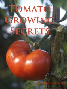 Tomato Growing Secrets. Use Epsom salt. Plant marigolds to prevent nematodes. Use garlic bulbs to improve taste and reduce fungi. Plus so much more!!!
