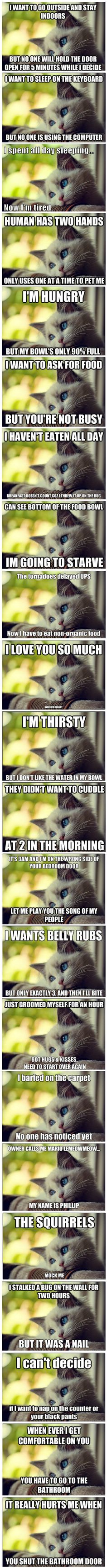 First World Cat Problems...So true, every one of them