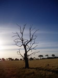 A Lonely Tree.