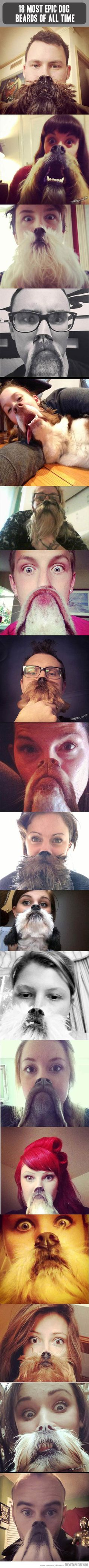 Dog beards.