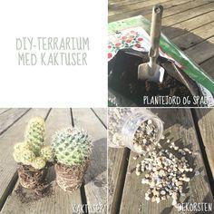 Kremmerhuset-bloggen: DIY-terrarium med kaktuser
