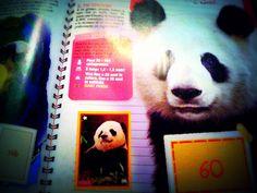 Un certo panda è finito anche sulle riviste patinate...