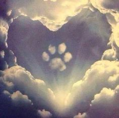All dogs go to heaven. Grateful for the time He lends them to us. ❤️ All dogs go to heaven. All Dogs, I Love Dogs, Cute Dogs, Dogs And Puppies, Doggies, Animals And Pets, Cute Animals, Pet Remembrance, Amor Animal
