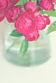 Imperfect roses #roses #photography
