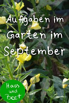 Tuin in september Taken from the balcony. A checklist for u wat tuinieren September, Beets, Home And Garden, Outdoor, Urban Gardening, Balcony Garden, Popular Pins, Bottle, Winter