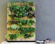 Nice Simple Design Of The Indoor Vertical Garden That Can Be Decor With Wooden…