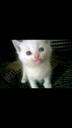 Baby pkitty #cats